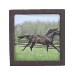 Horse Thoroughbreds, Wassl 1988, Keepsake Box