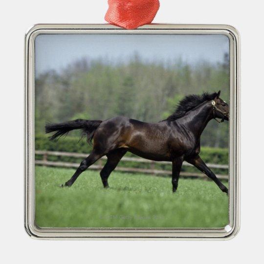 Horse Thoroughbreds, Wassl 1988, Metal Ornament