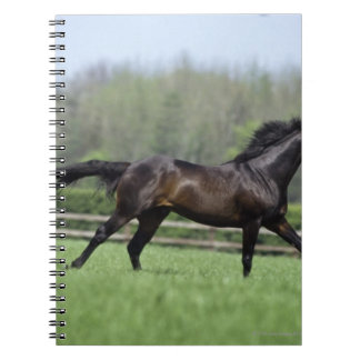 Horse Thoroughbreds, Wassl 1988, Notebook
