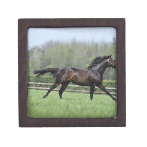 Horse Thoroughbreds, Wassl 1988, Premium Jewelry Box