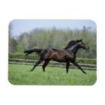 Horse Thoroughbreds, Wassl 1988, Rectangle Magnet