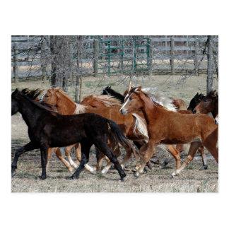 Horse Thunder Postcard