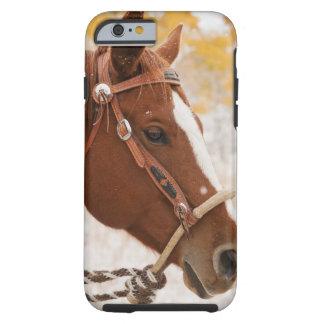Horse Tough iPhone 6 Case