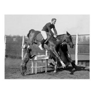 Horse Tricks, 1929 Postcard