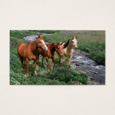 Horse Trio Business Card at Zazzle
