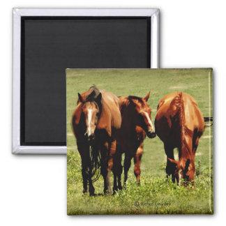 Horse Trio Magnet