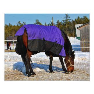 Horse - University Witter Farm Photo Print