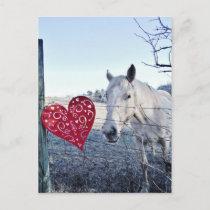 HORSE Valentine heart Holiday Postcard