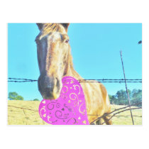 Horse Valentine  Pink and  turquoise Postcard