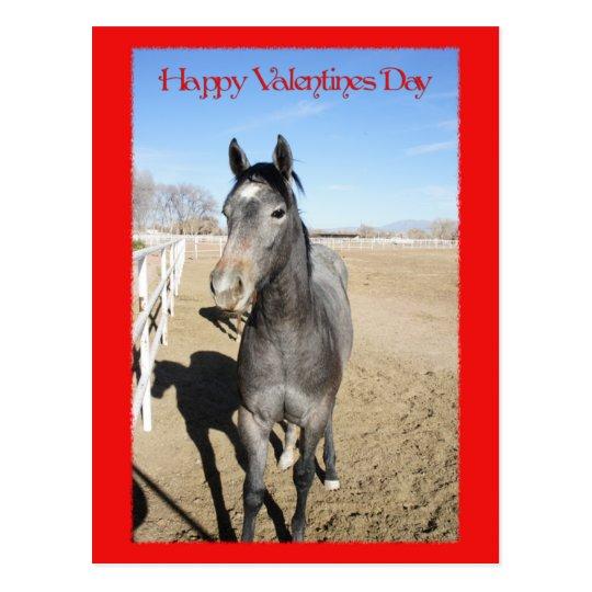Horse Valentine Postcard