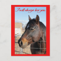 Horse Valentine V Holiday Postcard