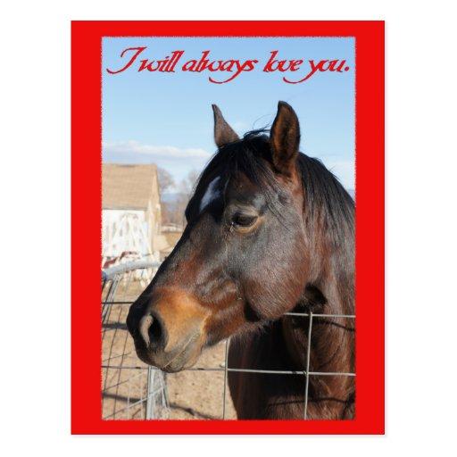 Horse Valentine V Post Cards