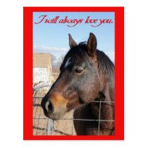 Horse Valentine V Postcard