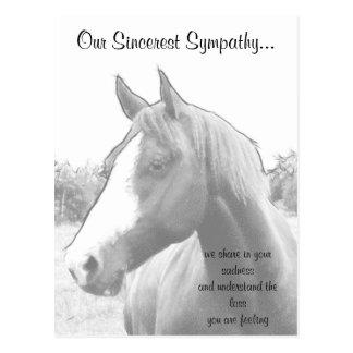 Horse Veterinarian Sympathy Postcards