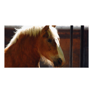Horse-viewed-from-profile807 BROWN HORSE WHITE MAN Photo Card
