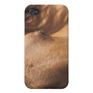 Horse Views iPhone 4 Case