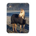 horse vinyl magnet
