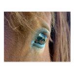 Horse Vision Postcard