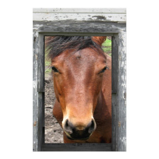 horse waiting for opportunity and success personalized stationery