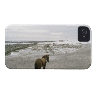 Horse walking on the beach iPhone 4 Case-Mate cases