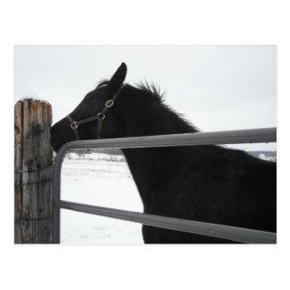 Horse whisperer postcard