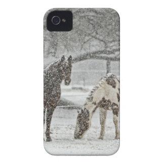 horse winter snow farm ranch animals snowy frozen iPhone 4 cover