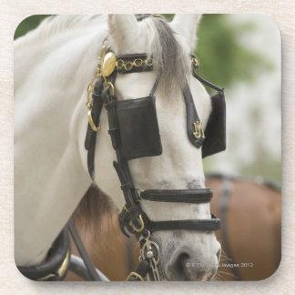 Horse with blinders beverage coaster
