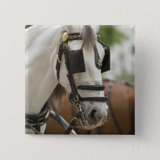 Horse with blinders pinback button