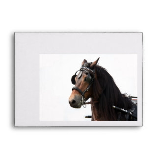 Horse with bridle envelope
