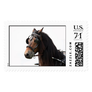 Horse with bridle postage stamps