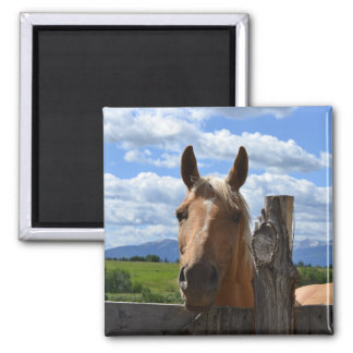 Horse with Mountain Background Magnet