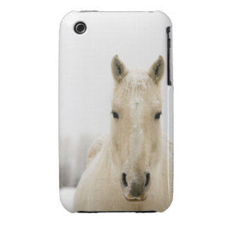 Horse with snow on head iPhone 3 cover