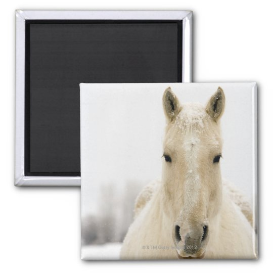 Horse with snow on head magnet