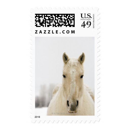 Horse with snow on head postage stamp