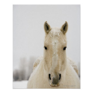 Horse with snow on head poster