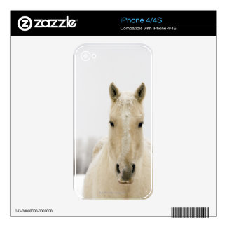 Horse with snow on head skin for iPhone 4S