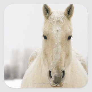 Horse with snow on head square sticker