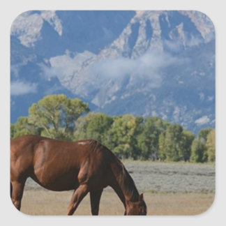 Horse, Wyoming Ranch Square Sticker