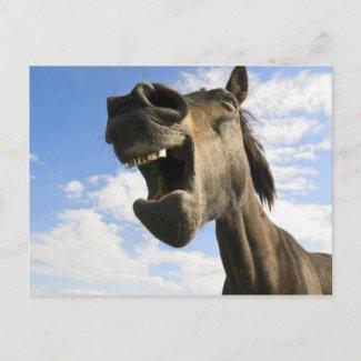 horse yawning postcard