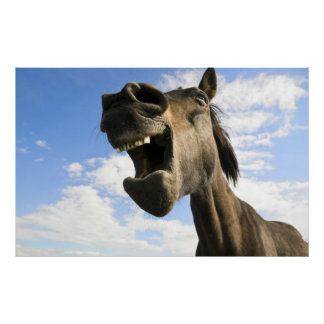 Horse Yawning Poster