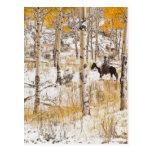Horseback rider 13 post card