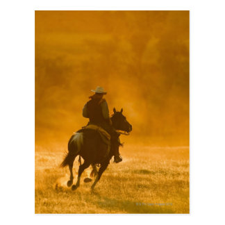 Horseback rider 3 postcard