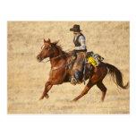 Horseback rider 8 postcards