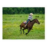 Horseback rider galloping in rural pasture postcard