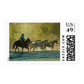 Horseback rider herding horses postage