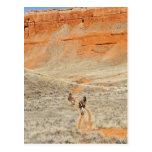 Horseback riders on trail postcard