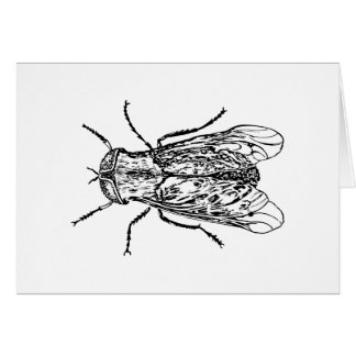 Horsefly Greeting Cards