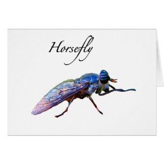 Horsefly Card
