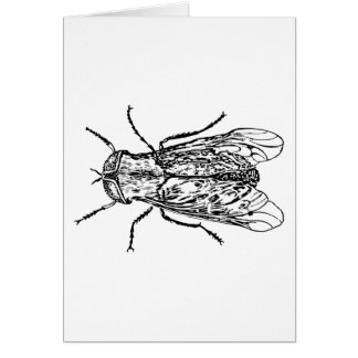Horsefly Cards