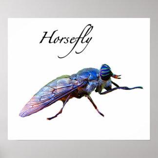 Horsefly Poster